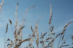 DAN_8716 (dan_c_west) Tags: nikon d750 sheffield bole hill grass nature blue sky