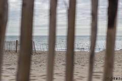 IMG_0271 (Azezjne (Az photos)) Tags: canon 75300 50 stm 600d berck sur mer bercksurmer cote côte dopale bromance plage sable bokeh zoom coucher soleil sunset beach sand eclipse dune mouette animaux animalière flou 75 300