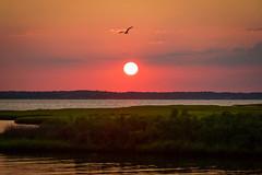 OCMD Sunset (joscelyn_p) Tags: oceancitymaryland oceancity ocmd maryland sunset sunsets colors colorful travel canon lightroom