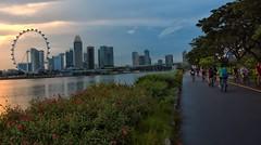 Evening Ride, Garden By Bay East (Br@jeshKr) Tags: gardenbythebay singaporeevening brajeshart flyer cycle ride sunset sunsetglow flower road