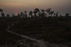 Sunrise (Keith Kelly) Tags: anlongklong asia cambodge cambodia kh kampuchea keithkelly krakor pursatprovince southeastasia country countryside farmland keithakelly rural sunrise pouthisat