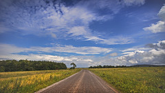 road to nowhere in particular (HHH Honey) Tags: sonya7rii tokina2035mmlens tokina salisburyplain wiltshire summer clouds cloudscape landscape yellow wildflowers umbelliferae road byway