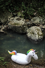 fantastic beasts and where to find them (faneeeeeeeeeeeh) Tags: unicorn yunque forest river rio puertorico