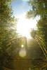 Who knows (luc.feliziani) Tags: controsole ponte alberi luce cielo sconosciuto flare outside