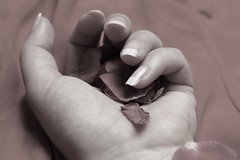 Out of my hands (Nathalie_Désirée) Tags: rose hand retro sepia colorless love lost sadness finger nail flower nature soft macro closeup girl feeling lonely fairytalegonebad