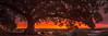 Taking in the sunset (Ray Jennings AU) Tags: sunset rayjennings sydney moretonbayfig panorama nikon2470 nikond810