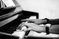 Qui va piano... (gwennscott) Tags: piano musique music hands blackwhite noirblanc pianist jazz musician instrument sound classic
