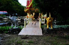 ,, DJ, Elephants, Big Drum ,, (Jon in Thailand) Tags: elephant elephants pachyderms swamp dog k9 dj bridge barkingdog yellow red blue green gold bigdrum jungle nikon d300 nikkor 175528 themonkeytemple buddhatemple lotusflower lotus reflection trees orange littledoglaughedstories