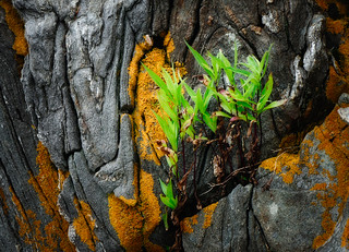 Rocks, Lichens, and Leaves