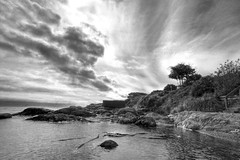 Wings in the Sky (ecstaticist - evanleeson.com) Tags: black white bw ocean seascape rocks tree silhouette