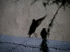 El mito de la caverna (Luicabe) Tags: airelibre ala árbol ave cabello enazamorado exterior figura luicabe luis naturaleza pared rama silueta verderón vuelo yarat1 zamora zoom ngc