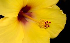 7P7A4712-Edit (Mark Ritter) Tags: floral flora flowers closeup macro nature garden