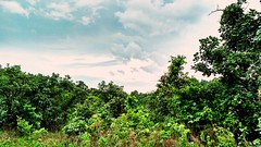 After A Heavy Rainfall 😍 #Clouds #Sky #Trees #Plants #Scenery #Contrast #HDR #MotoCam #MotoG3 #Filter #NatureLover #Nature #Mothernature #MyShot #MyStyle #Flicker #Yahoo #comments #Likes #Followme #Follow (rockani451) Tags: nature flicker trees hdr scenery plants mothernature motog3 naturelover clouds filter comments followme motocam contrast yahoo mystyle myshot follow likes sky