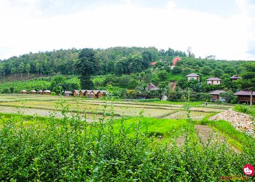 BMP-Elephant-Farm-Chiang-Mai-1