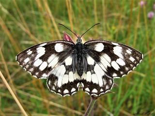 Butterfly 1372