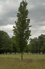 IMGP3558.jpg (Zeilenende) Tags: solitär rosensteinpark stuttgart baum stuttgartnord