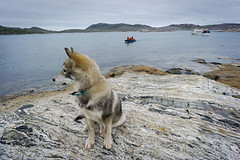 torngat0382 (Destination Labrador) Tags: morrow torngatmountainsnationalpark scenerywildlife scenery summer summerscenery 2017
