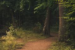 Forest Path (Netsrak) Tags: 7weiher abend atmosphäre baum bäume europa europe forst landschaft natur rheinland rhineland see seen sommer stimmung teich wald wasser atmosphere evening forest gelb green grün lake landscape mood nature pond summer tree trees water woods eifel