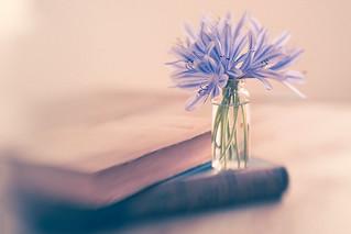 Serene Blue