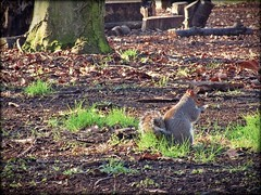 Squirol auttum (j.abellan3) Tags: nature landscape auttum life animals phography light home
