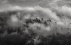 on the clouds... (Alvin Harp) Tags: march 2014 oregon mountaintop cloudsstormssunsetssunrises morningclouds i5 sonynex5r e55210mm natureswonder monochrome bw blackandwhite alvinharp