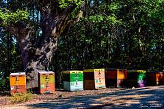 Κυψέλες στο δάσος !!! (Spiros Tsoukias) Tags: hellas ελλάδα μακεδονία εξοχή λουλούδια βουνά κάμποσ μέλισσεσ κυψέλεσ μέλι greece macedonia countryside flowers mountains plain bees hives honey grecia campagna fiori montagne pianure leapi alveari ilmiele griechenland mazedonien landschaft blumen berge ebenen bienen bienenstöcke honig греция македония сельскаяместность цветы горы равнины пчелы ульи мед