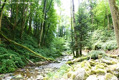 Cascades du Bockloch (☆ Sonia ☆) Tags: waterfall bockloch alsace vosges kruth france trip cascade summer nature beautiful