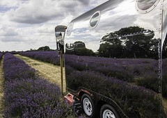Honda Power (sussexscorpio) Tags: banstead july lavender mayfield mayfieldlavenderfarm surrey mirror van cafe airsteamcafe honda reflection reflections power canon canon80d sky cloudy fields lavenderfields stormy purple color mauve lines colour mirrored