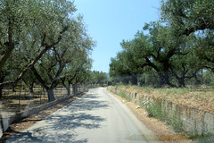 Olive Grove Road (RobW_) Tags: olive grove road agios kirikas zakynthos greece friday 21jul2017 july 2017