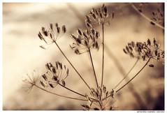 On the Row (Matías Brëa) Tags: naturaleza nature