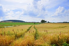 summer moods (JoannaRB2009) Tags: summer field nature landscape view hill gold golden yellow green trees path clouds sky weather hesse hessen germany deutschland