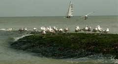 North Sea - Belgium (roland_tempels) Tags: sea nrtohsea water belgium seagull boat