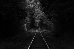 Slice of Light (JY_Photos) Tags: jyphotos indiana usa monochrome blackandwhite bw nikon nikond7500 affinityphoto tamron tracks trees light tamronsp70200mmf28g2 dxoopticspro columbus