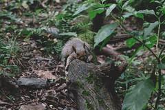 20170722-IMG_9892 (franciscoruela) Tags: centralpark nature nyc vsco wildlife