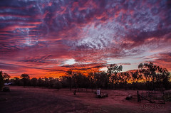 Red on Red (Cisc Pics) Tags: red sunset sky queensland charleville eveningstar thurlbystation outback clouds colour nikon nikkor nature night natural australia d7000 dx