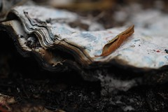 Wharton State Forest (elisecavicchi) Tags: burnt book forest fire pinelands pine barrens wharton state new jersey nj hammonton batsto curled leaf sheaf pages paper woods focus explore charcoal ashes cinder charred burned layers striated outdoor canon