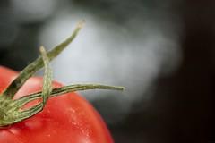3 (Christelle Diawara) Tags: canon600d 60mm macro tomate tomato trois three été summer macromondays rouge red