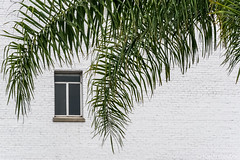 Naturally Framed (www.karltonhuberphotography.com) Tags: 2017 architecturaldetails brickbuilding bricks karltonhuber naturalframe oldbuilding palmtree santaana southerncalifornia streetphotography urban white window