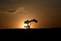 Evening Comes to the Mara (The Spirit of the World) Tags: sun sunset light hill acacia tree plant nature cloud sky safari gamedrive masaimara themara kenya eastafrica africa gamereserve nationalpark