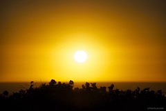 Luminous (Joe Hengel) Tags: luminous southerncalifornia sunset socal sea seascape seaside orangecounty oc outdoor ocean orange pacificocean bougainvillea silhouette silhouettes yellow goldenstate golden goldenhour glow theoc horizon california ca sunlight sun sunglare danapoint