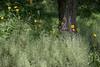 Enchanting Garden 06-25-17 (MelenaMe) Tags: enchanting garden flower flowers tree plants mysterious
