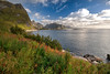 Lofoten Islands, Norway. The town of Reine, in the distance, viewed from near the trailhead for Reinebringen (ruminate) Tags: 2016 lofotenislands nikon nikond90 norge norway reine scandanavia travel hiking outdoors autumn autumncolours wildflowers ocean mountains seascape