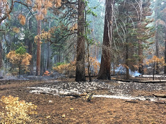 Smolder (Tim Gupta) Tags: california unitedstates fire kingscanyon forestfire iphoneography iphone
