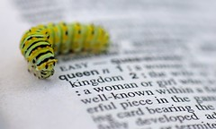 Queen Book Worm (dianne_stankiewicz) Tags: hmm macromondays queen bookworm dictionary book caterpillar