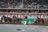 Calgary Stampede Chuckwagon Racing (joe_goodings) Tags: canada 2017 calgary calgarystampede chuckwagonracing