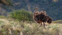 Tsavo West-8478 (ovg2012) Tags: kenia kenya tsavo tsavowestnationalpark