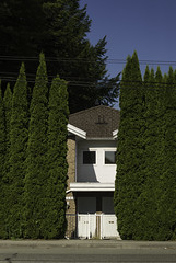 hedge (w.d.worden) Tags: mainstreetvancouver hedges houses
