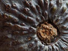 alligator pear (Arnd Gräfe) Tags: alligatorpear fruit perseaamericana avocado obst macromondays memberschoicetexture frucht