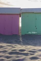 IMG_0538 (Azezjne (Az photos)) Tags: canon 75300 50 stm 600d berck sur mer bercksurmer cote côte dopale bromance plage sable bokeh zoom coucher soleil sunset beach sand eclipse dune mouette animaux animalière flou 75 300