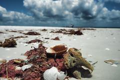 beach debris (janedoe.notts) Tags: beach sea shell seashell sand florida sandbar debris
